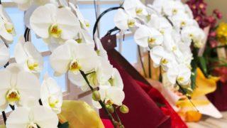 通販の白い胡蝶蘭