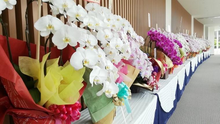 胡蝶蘭の通販ショップ