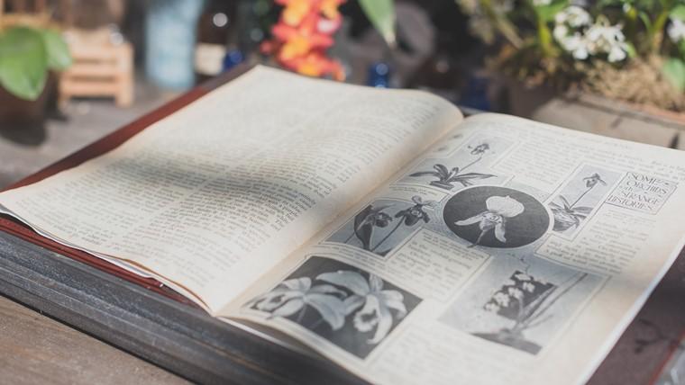 胡蝶蘭の花言葉が書いてある本