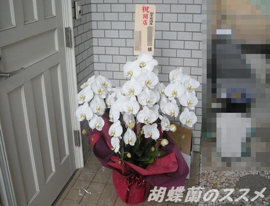 5本立ちの白い胡蝶蘭