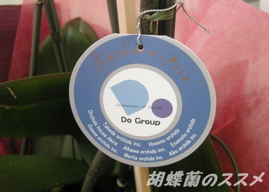 胡蝶蘭のタグ