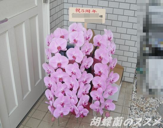 3本立ちのピンクの胡蝶蘭