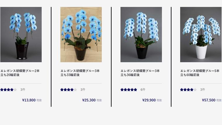 青い胡蝶蘭、ブルーエレガンス